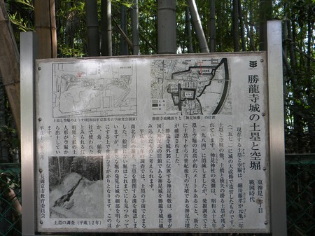 Syoryu1.JPG